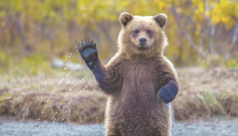 медведь с добрым утром картинки