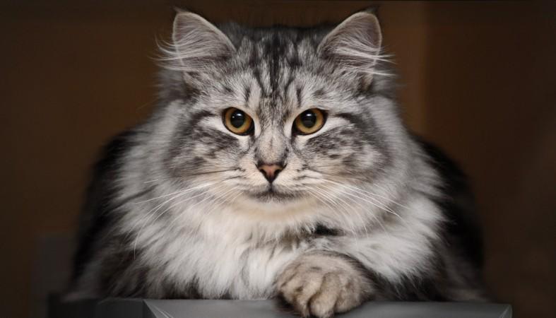 Учёные поведали , почему котят нельзя ранее  времени отлучать отматери