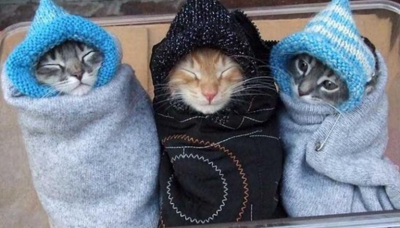 Картинки похолодало одевайся теплее, добрый