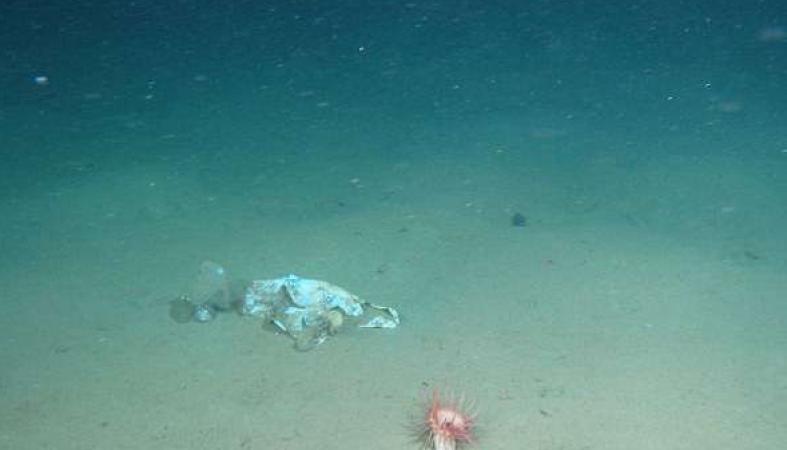 Пластиковый пакет впервый раз найден надне самой глубокой впадины наЗемле