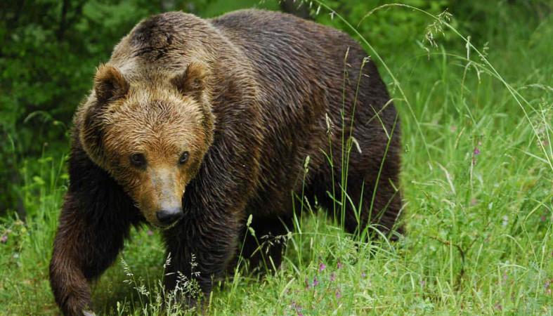 ВКарелии медведи зачастили вгости клюдям