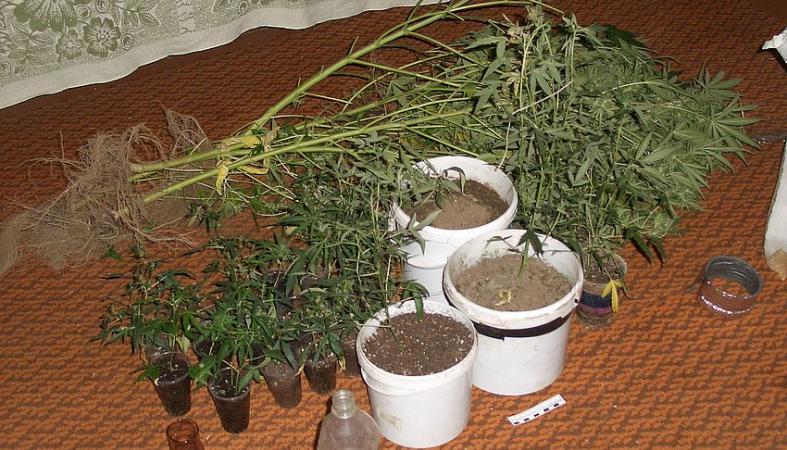 Конопля в петрозаводске конопля выращиваемая в лечебных целях