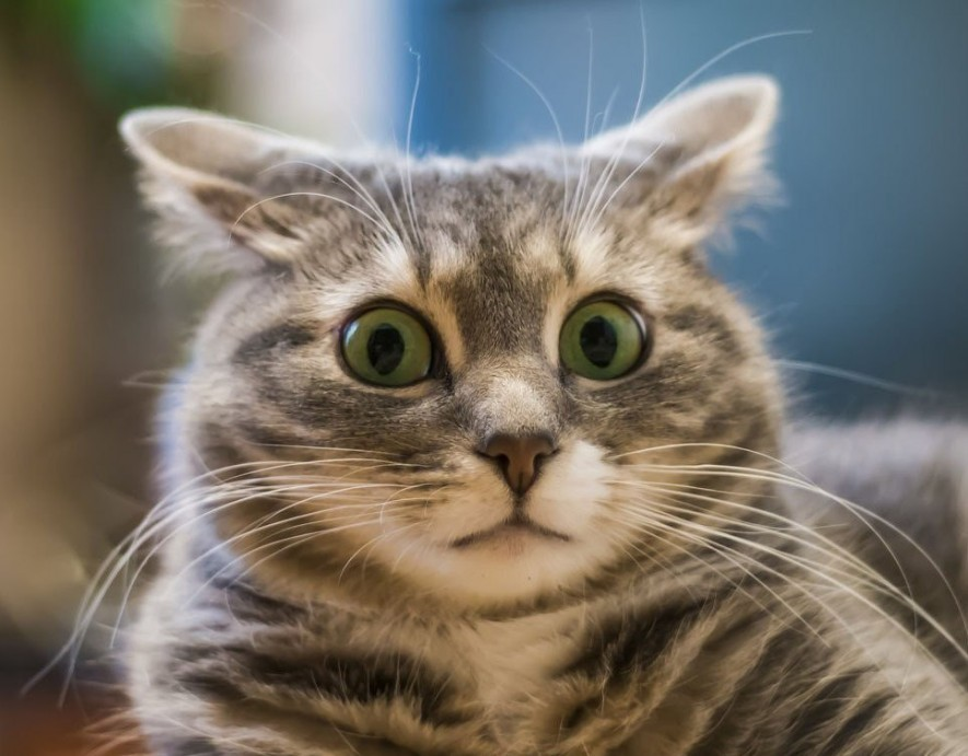 """Результат пошуку зображень за запитом """"котик"""""""